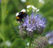 Blühwiese der Naturheilpraxis Tapken_8